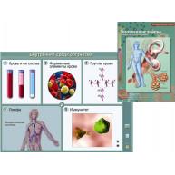 Интерактивные плакаты. Биология человека.